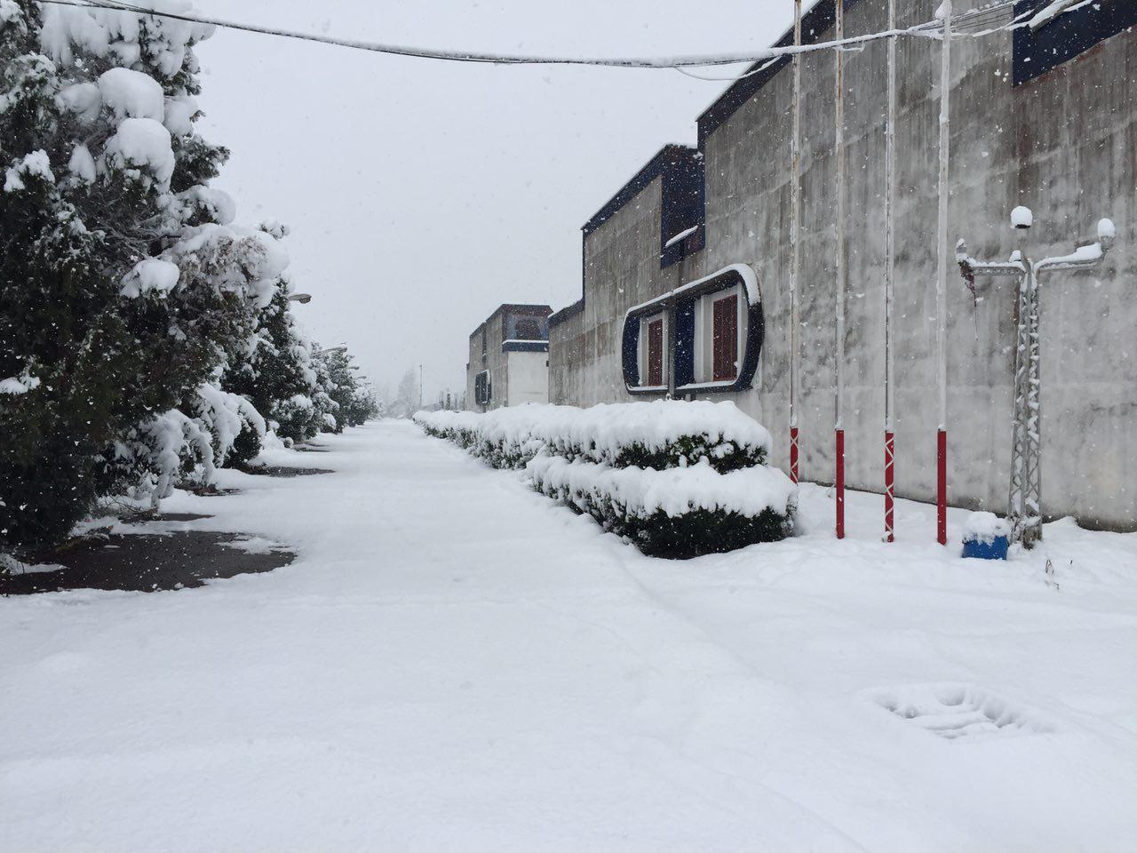 بارش برف زمستانی